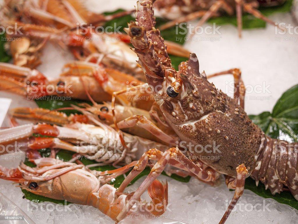 Fresh seafood, Barcelona, Spain royalty-free stock photo