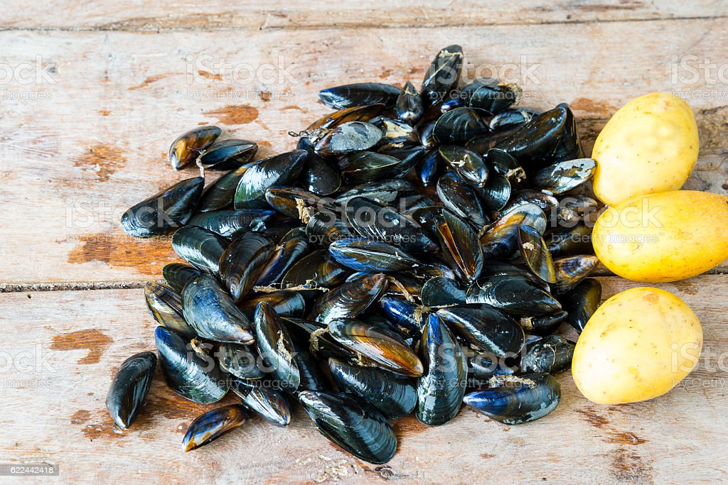 Fresh seafood conception stock photo