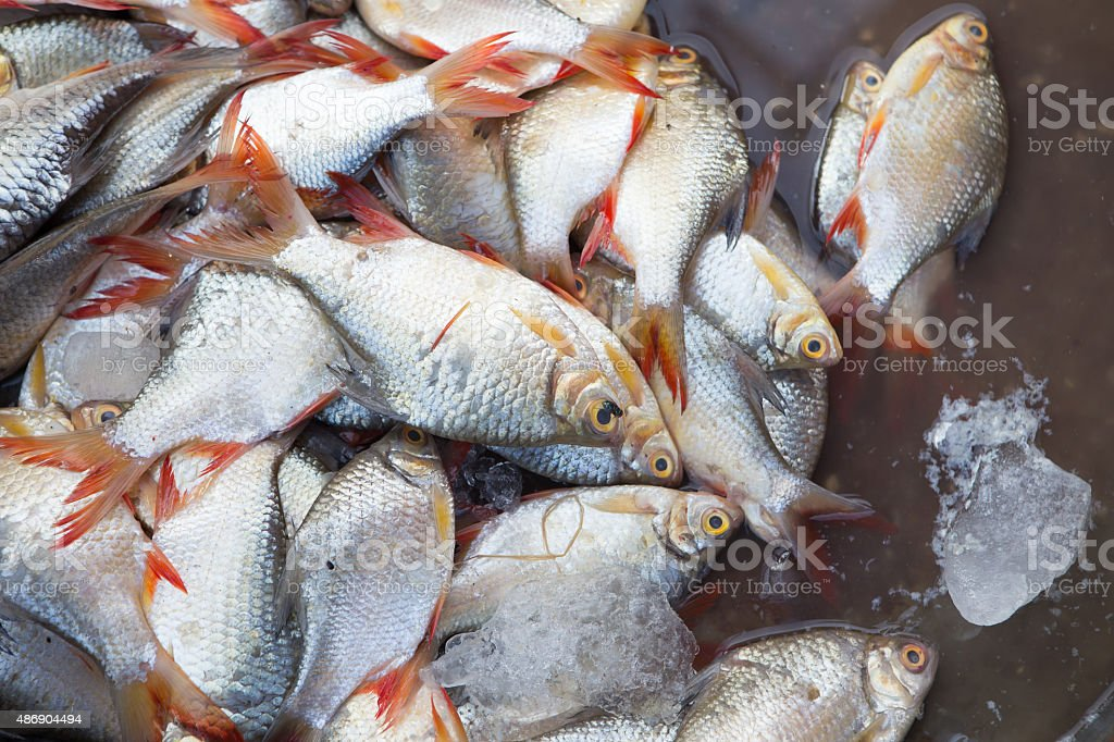 fresh seafood on the market in Thailand stock photo