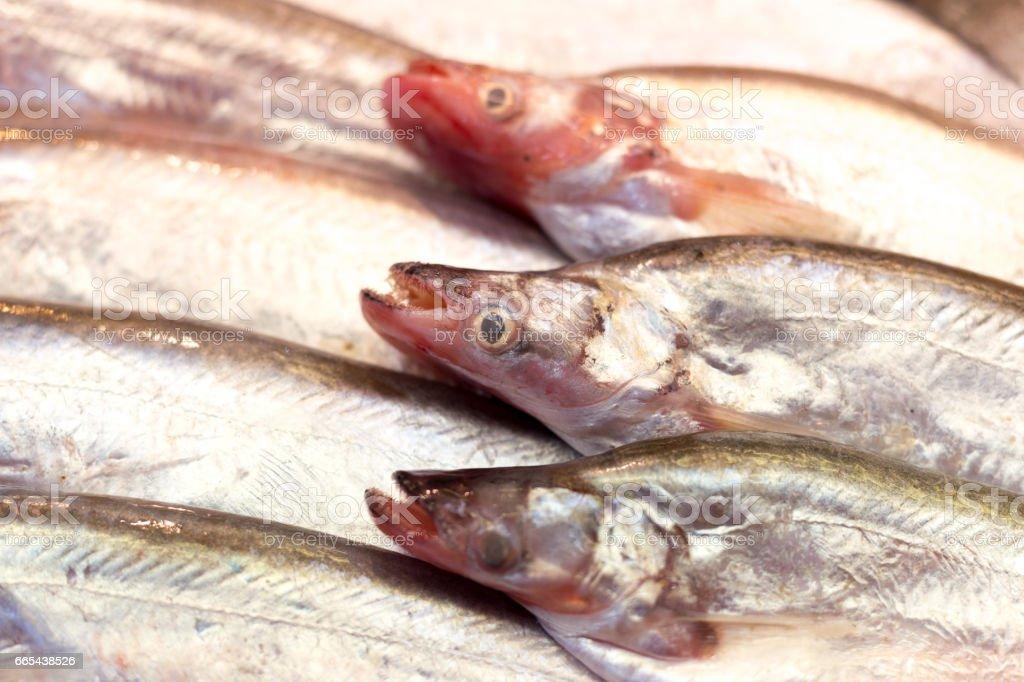Fresh Sheatfish on Ice selling in a market stock photo