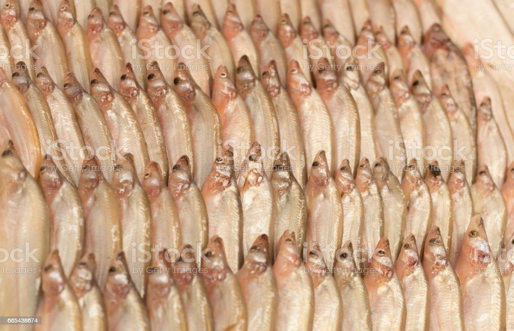 Fresh Sheatfishes on ice at seafood market stock photo