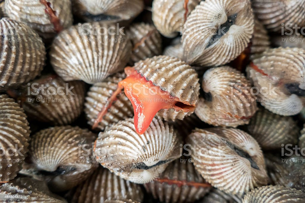 Fresh Shellfish Blood Cockles for sale in market stock photo