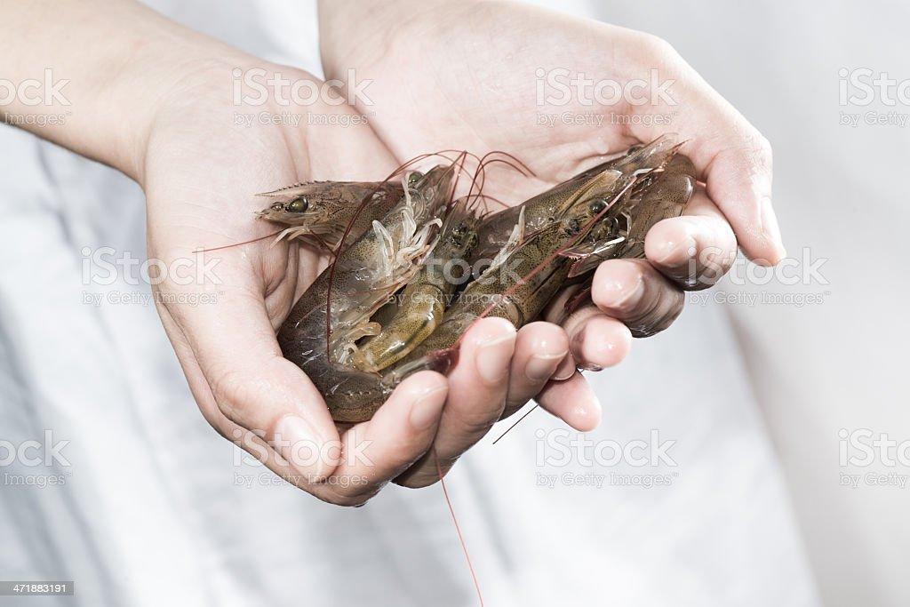 fresh shrimp on hand royalty-free stock photo