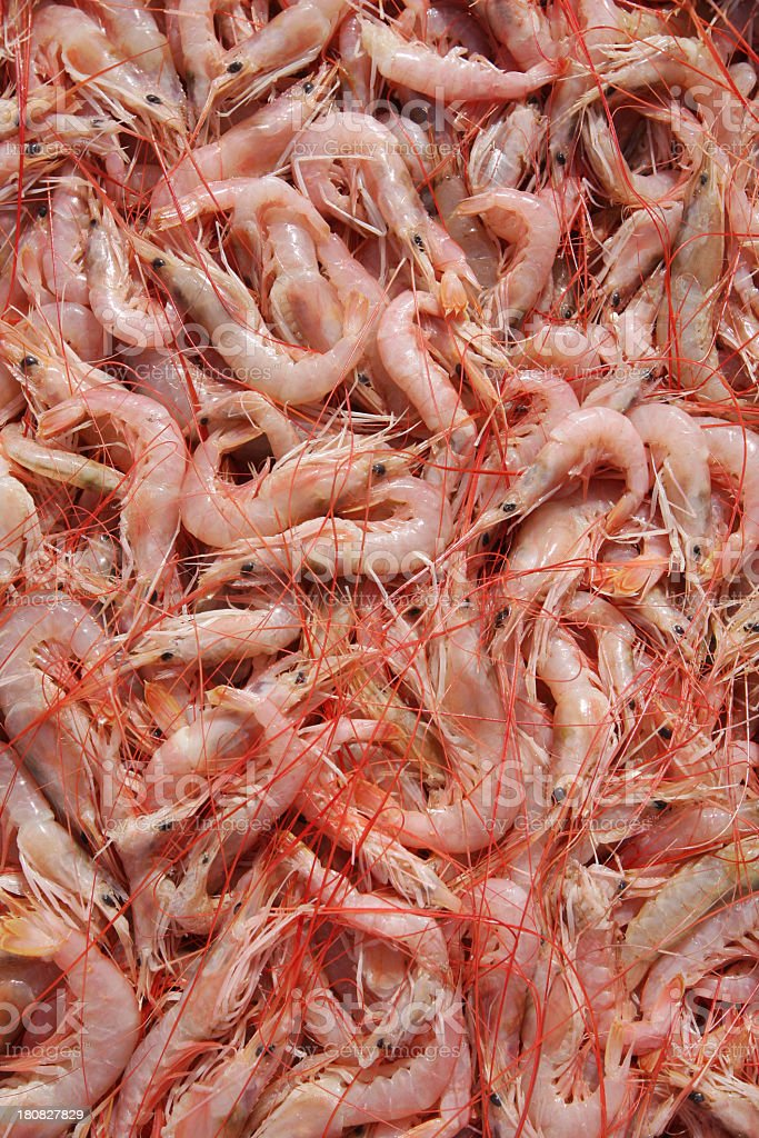 Fresh shrimp royalty-free stock photo