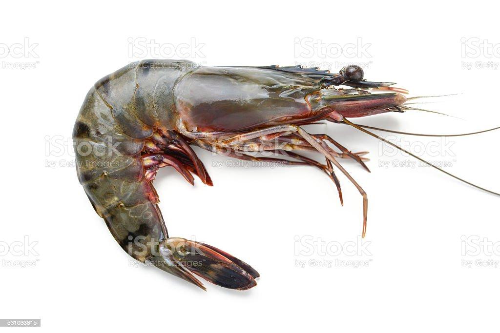 fresh shrimp stock photo