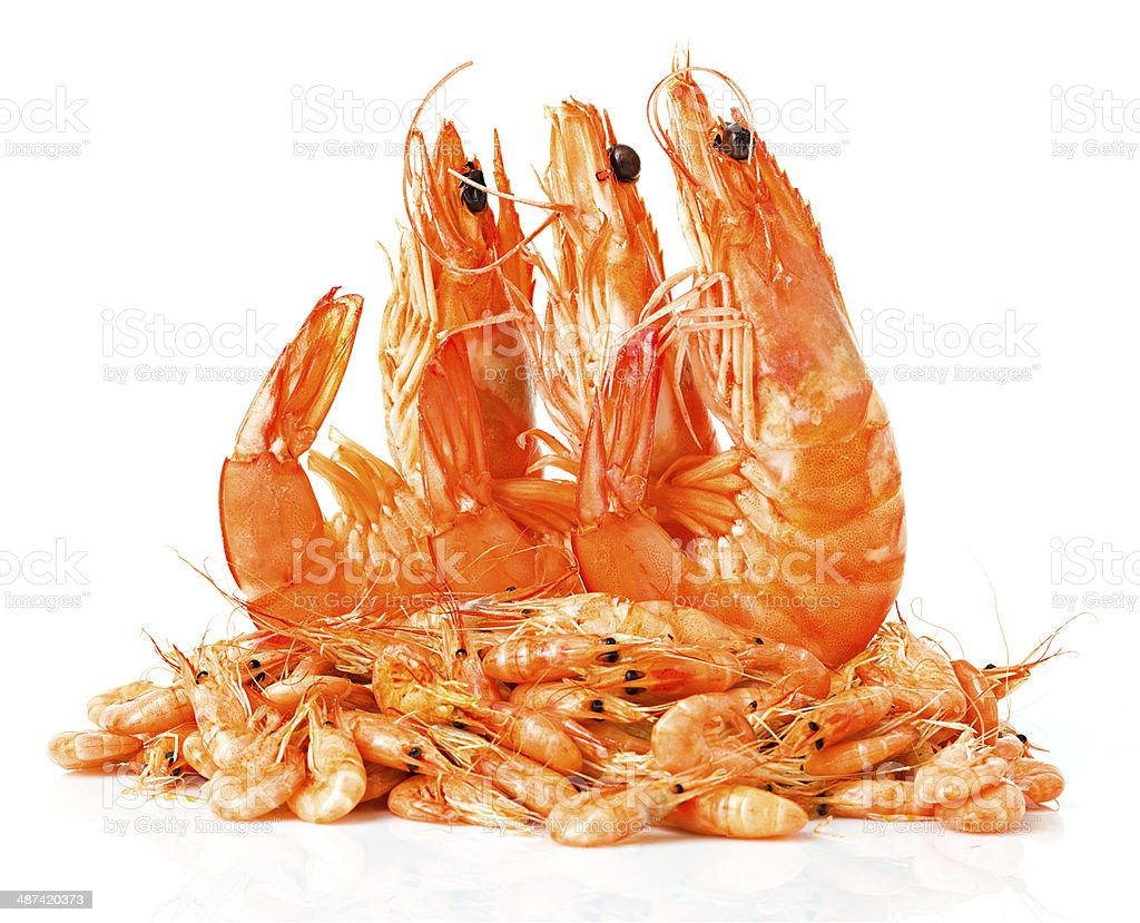 fresh shrimps isolated stock photo
