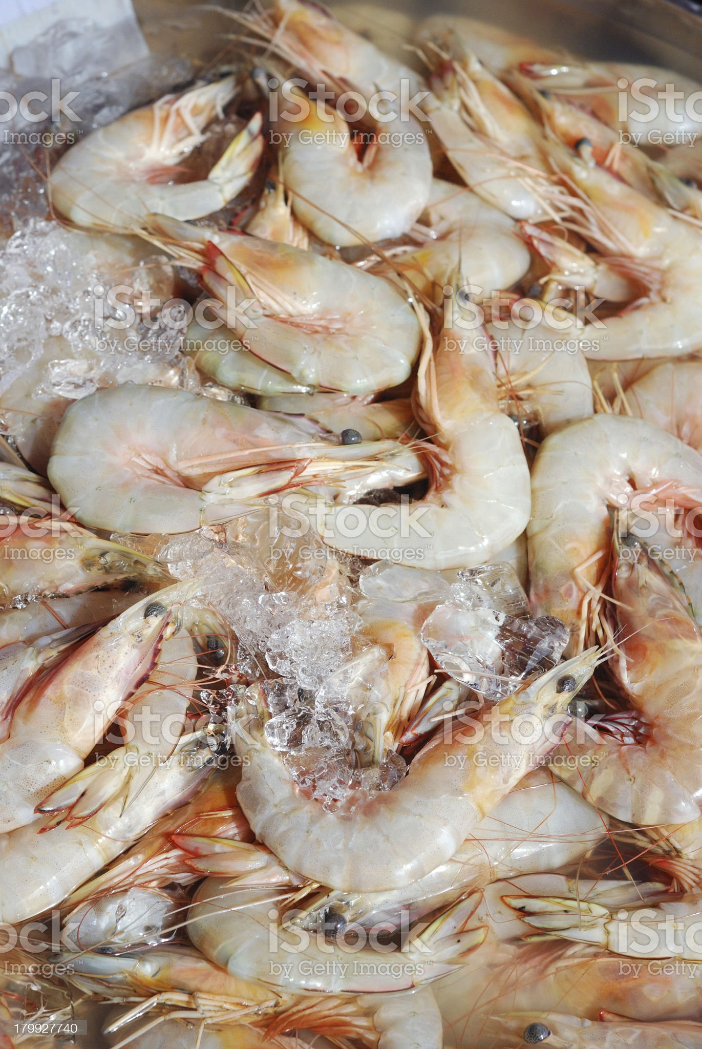 fresh shrimps royalty-free stock photo