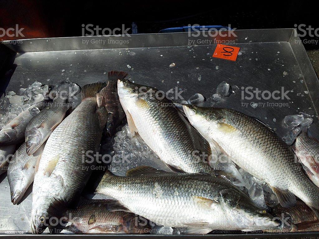 Fresh Silver Perch on Display stock photo