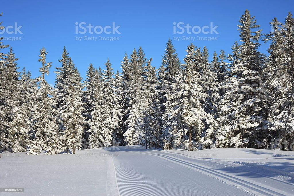 Fresh Ski Path royalty-free stock photo