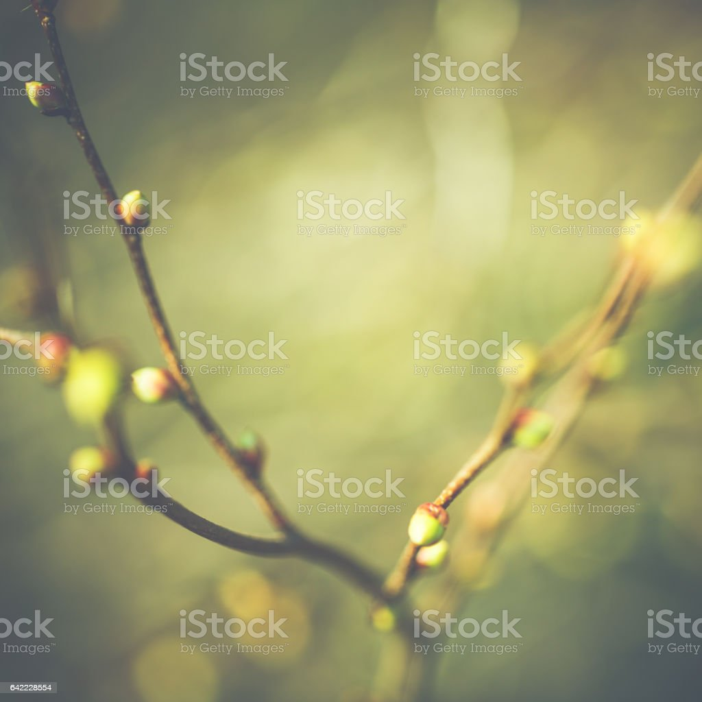 Fresh small bud on twig in sunny spring stock photo