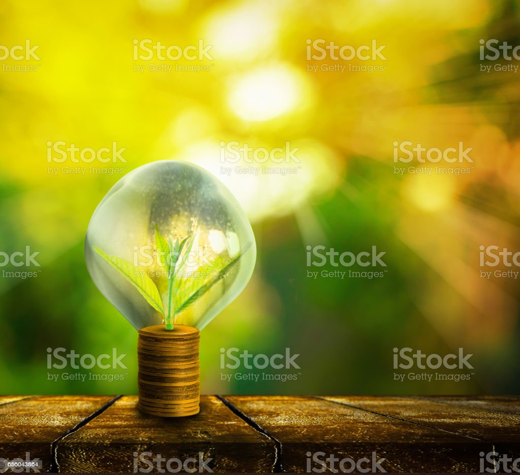Fresh small tree growth on gold coins stock photo