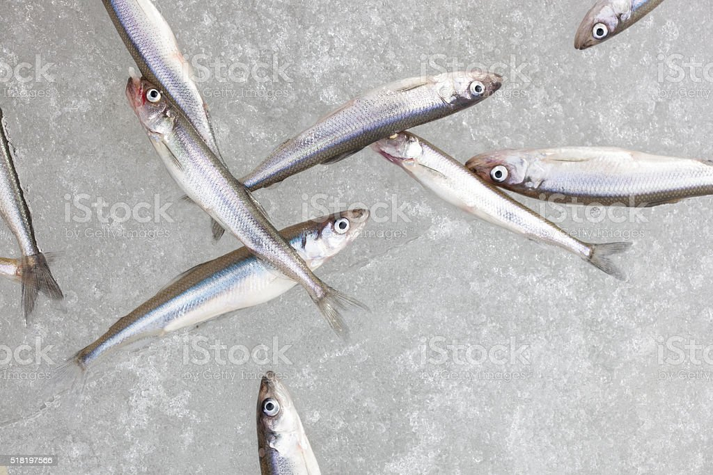 fresh smelt fish on the snow top view still life stock photo