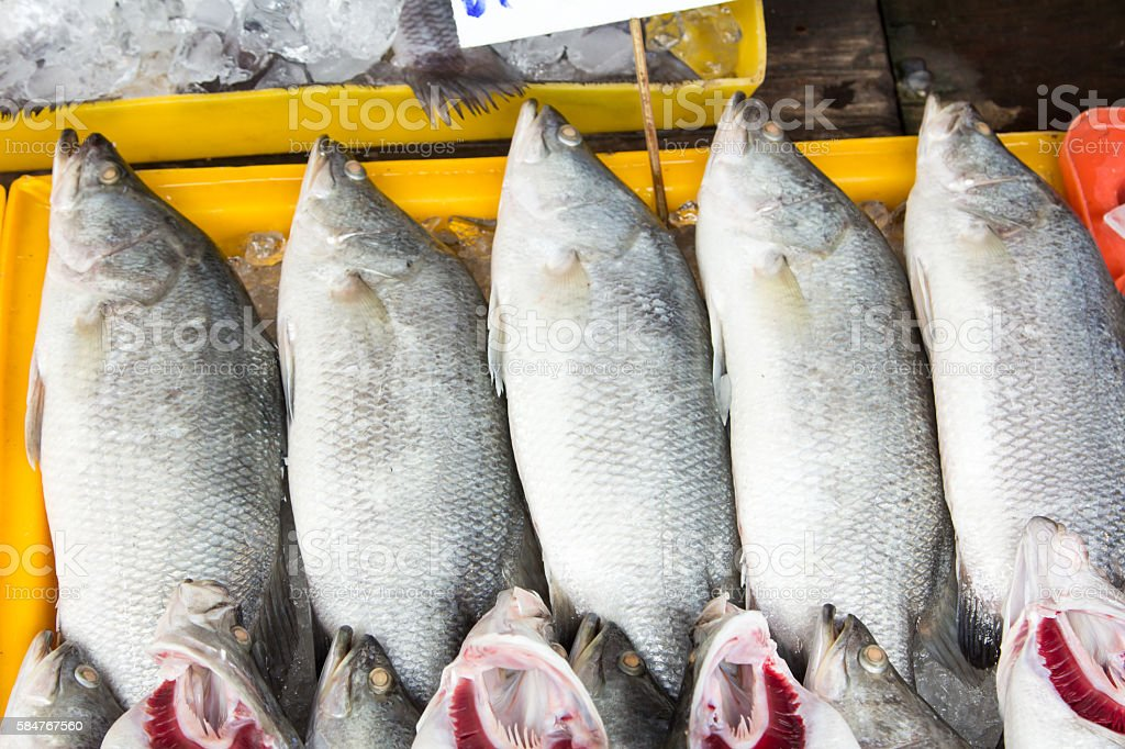 Fresh snapper on the ice. stock photo