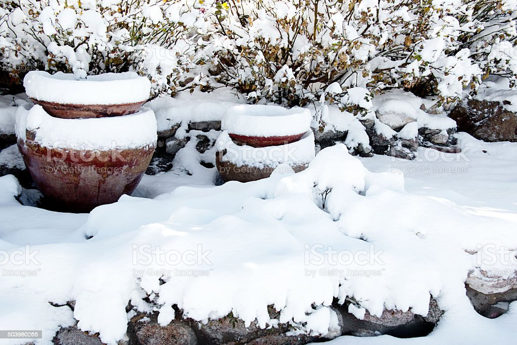 Fresh snow in backyard garden stock photo