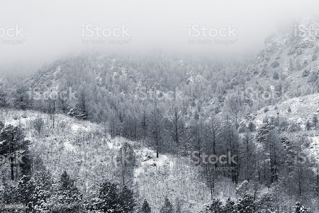 Fresh Snow in Cheyenne Mountain State Park stock photo