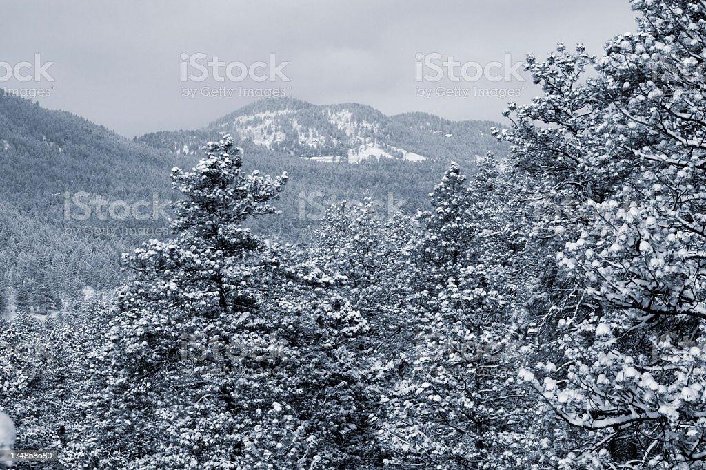 Fresh Snow royalty-free stock photo