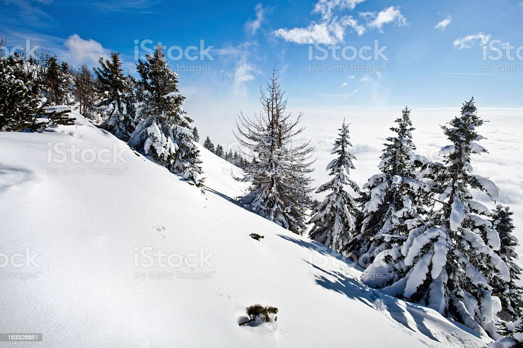Fresh snow winter landscape royalty-free stock photo