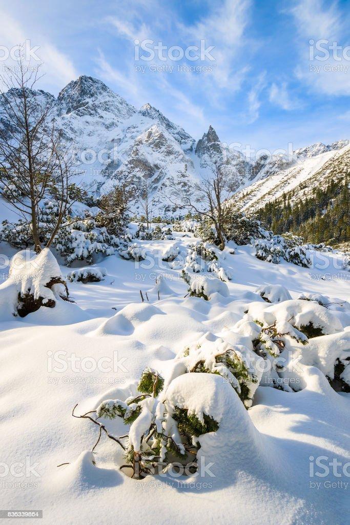 Fresh snowfall near frozen Morskie Oko lake in winter, Tatra Mountains, Poland stock photo