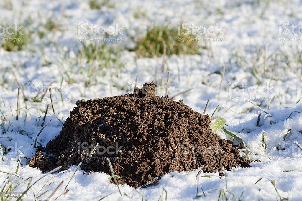 Fresh soil from frozen mole hill stock photo