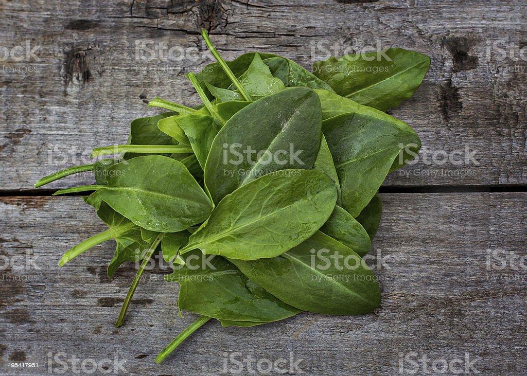 fresh sorrel royalty-free stock photo