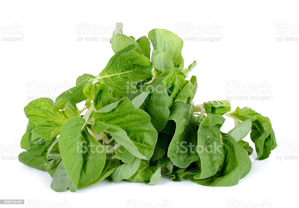 fresh spinach isolated on the white background stock photo