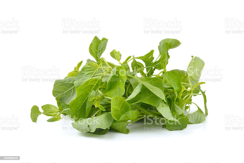 fresh spinach on white background stock photo
