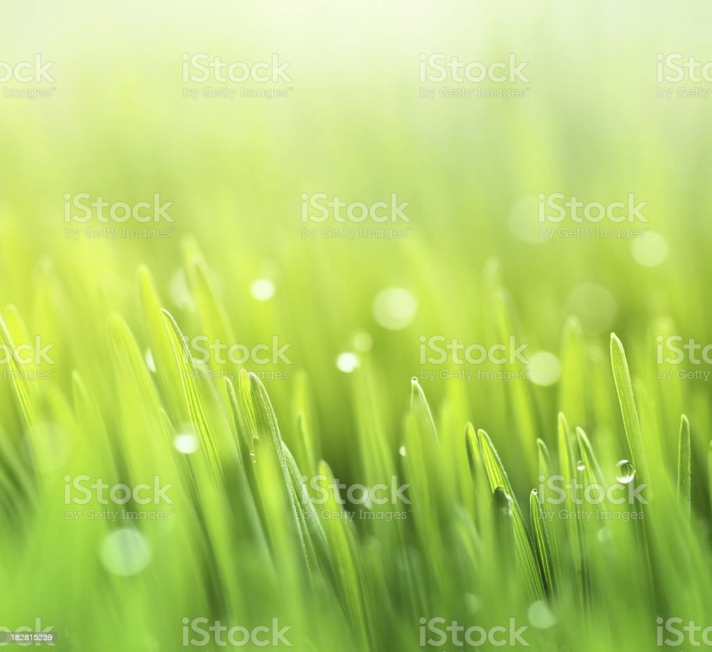 Fresh spring grass background royalty-free stock photo