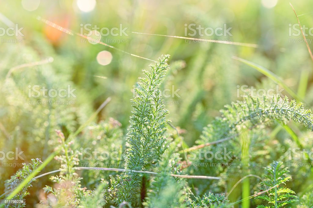 Fresh spring grass in meadow stock photo