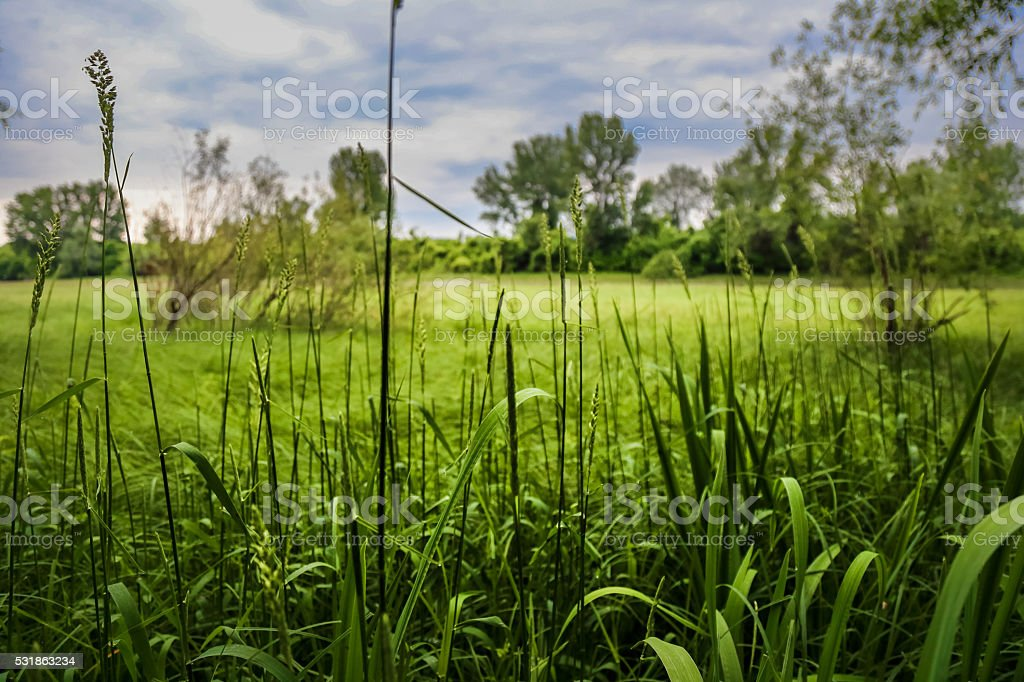 Fresh spring grass landscape stock photo