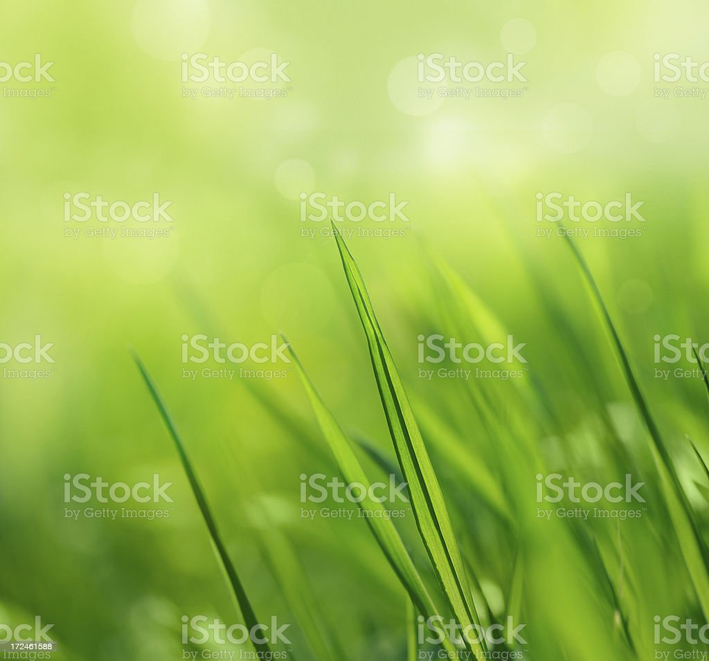 Fresh spring grass royalty-free stock photo