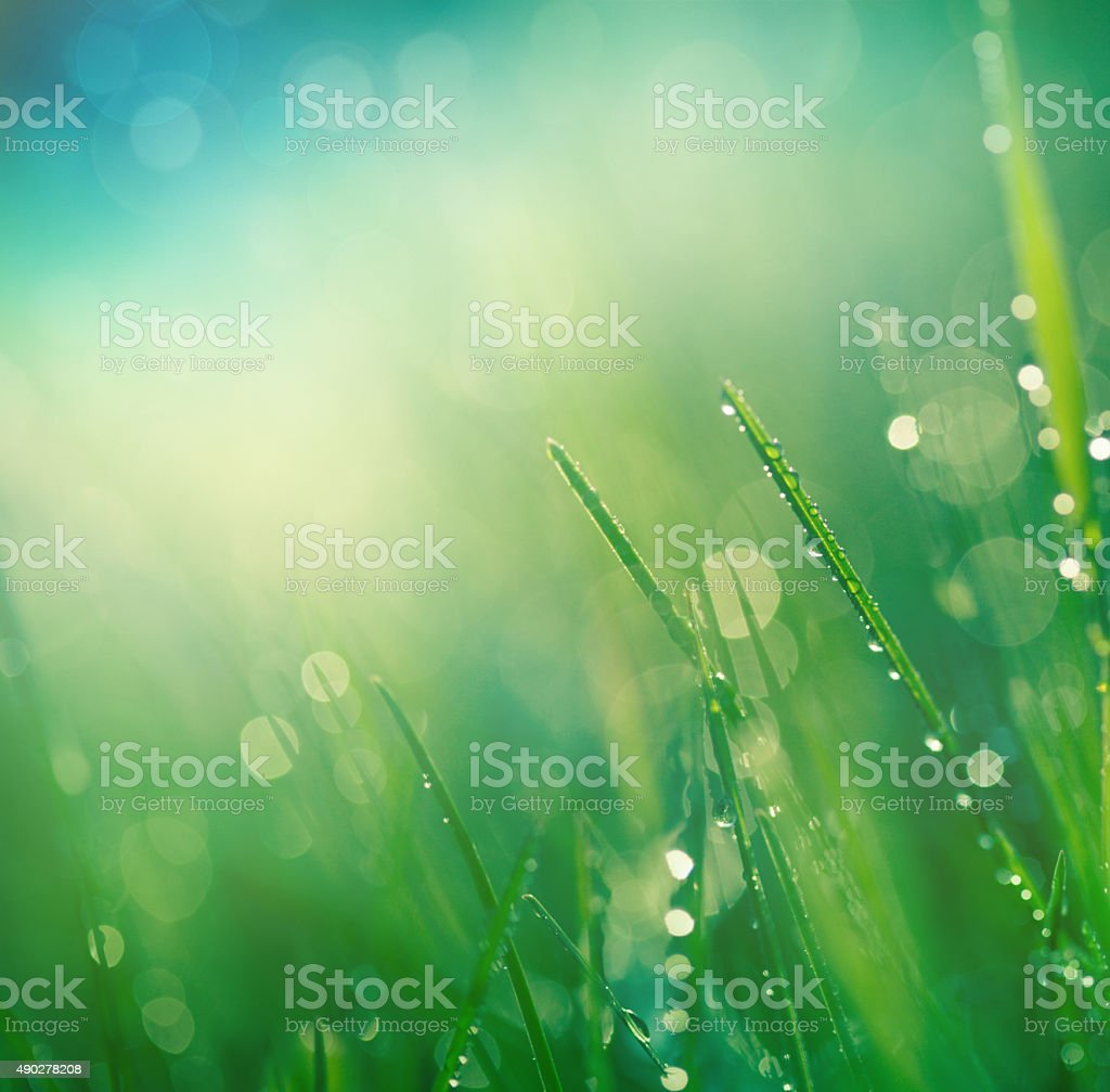 Fresh spring grass stock photo