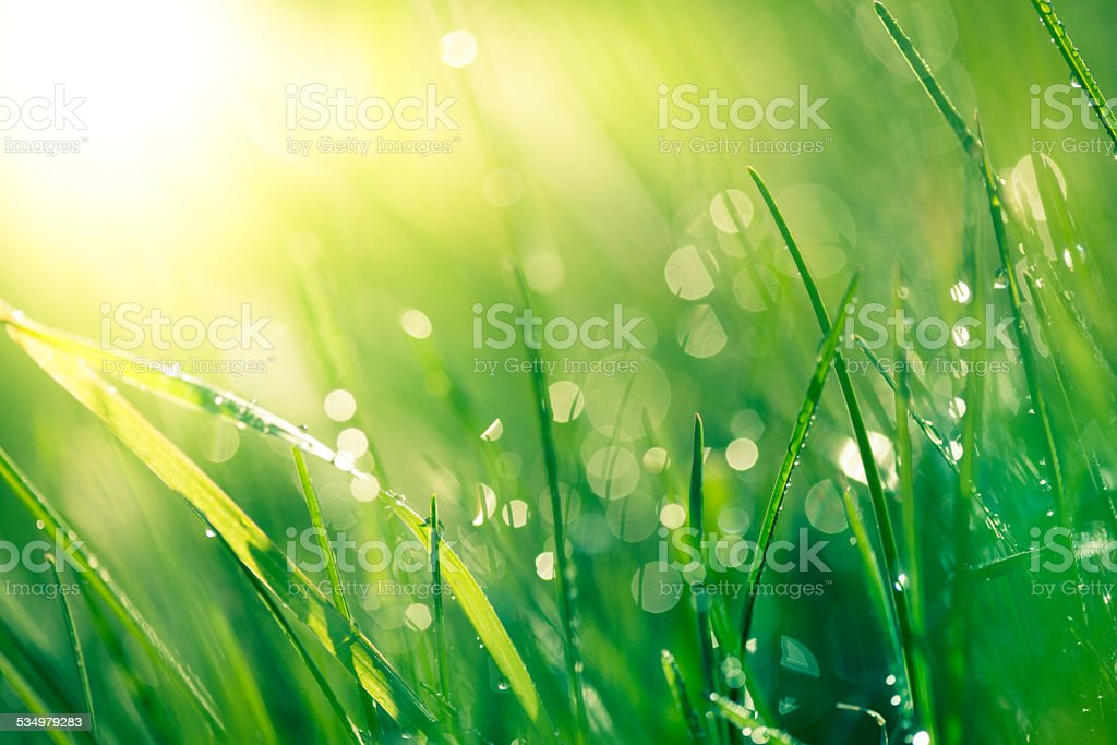 Fresh spring grass with raindrops stock photo