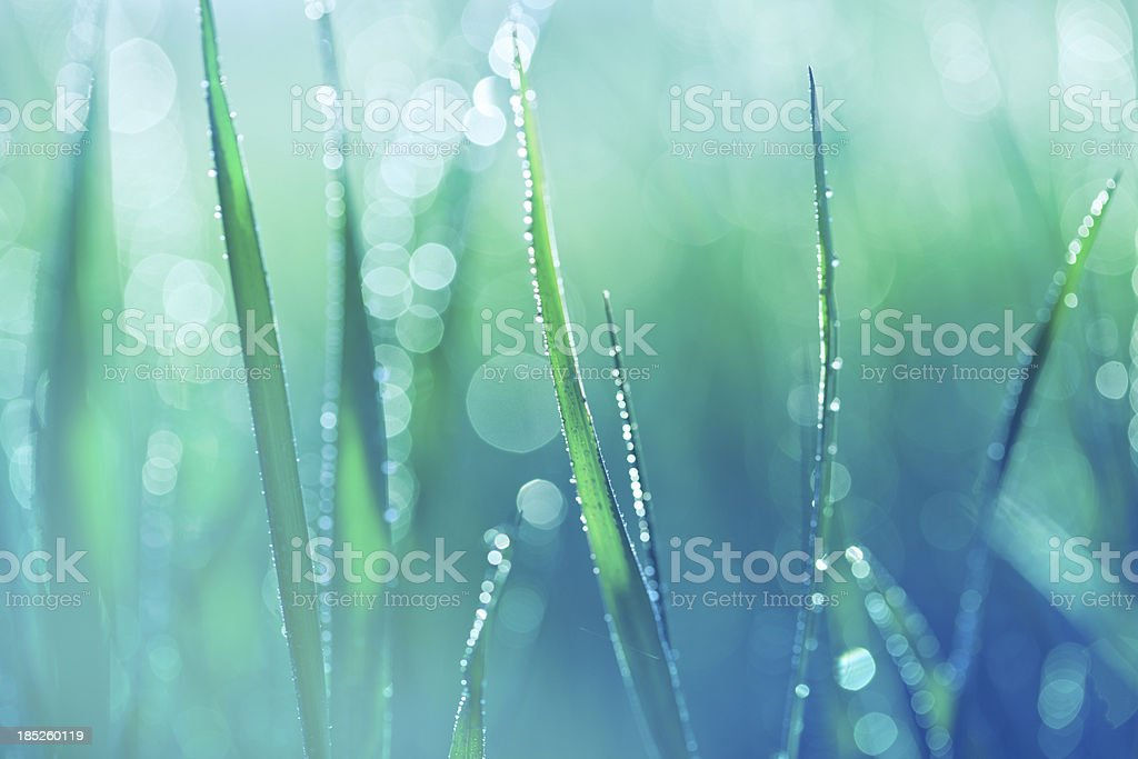 Fresh spring grass with water drops stock photo