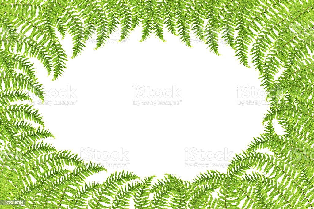 Fresh spring green Fern leaf isolated on white background. royalty-free stock photo