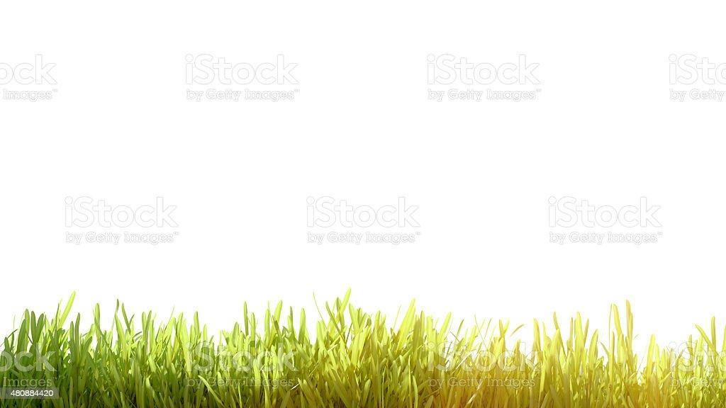 Herbe verte fraîche printemps photo libre de droits