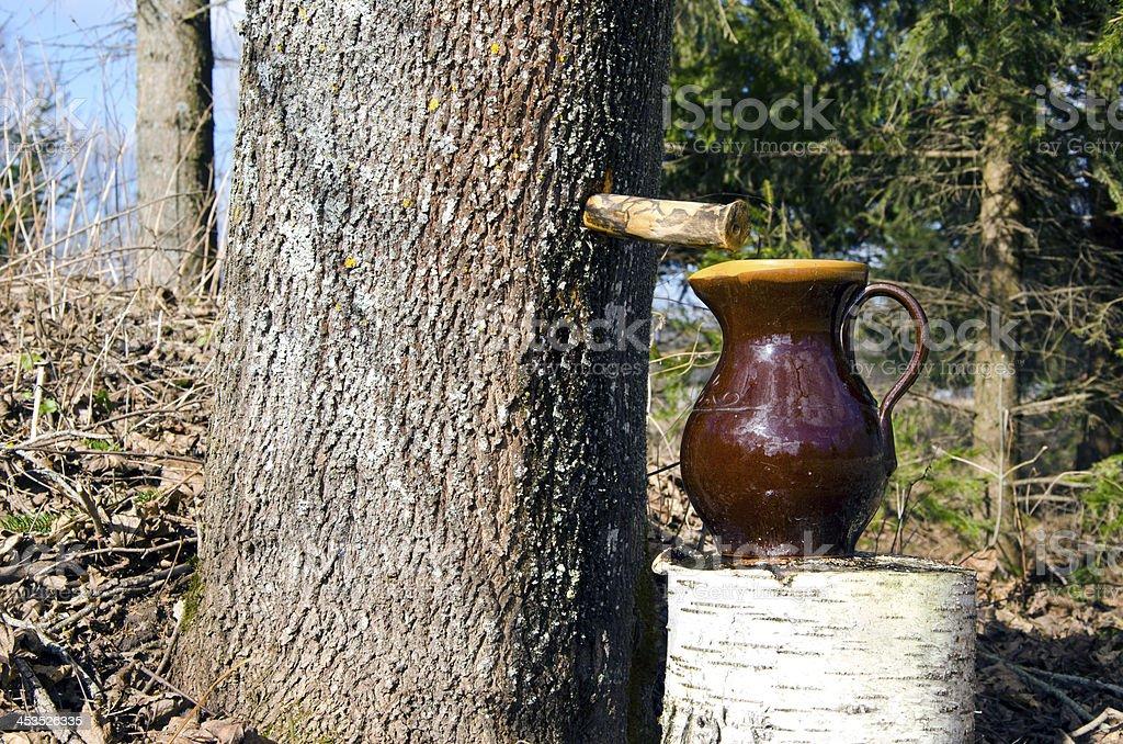 fresh spring maple sap stock photo
