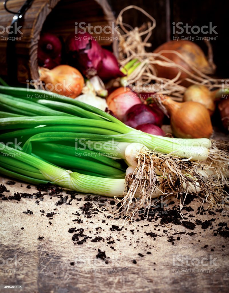 Fresh spring onion and onions stock photo