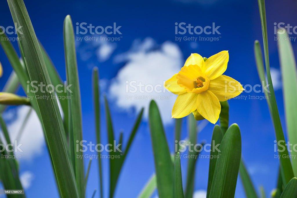 Fresh spring royalty-free stock photo