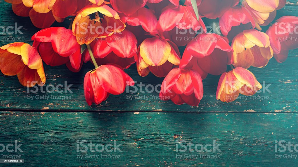 Fresh spring red tulips flowers on wooden planks stock photo