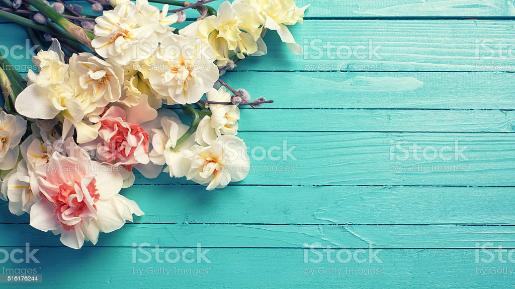 Fresh  spring yellow  daffodils or narcissus and willow flowers stock photo