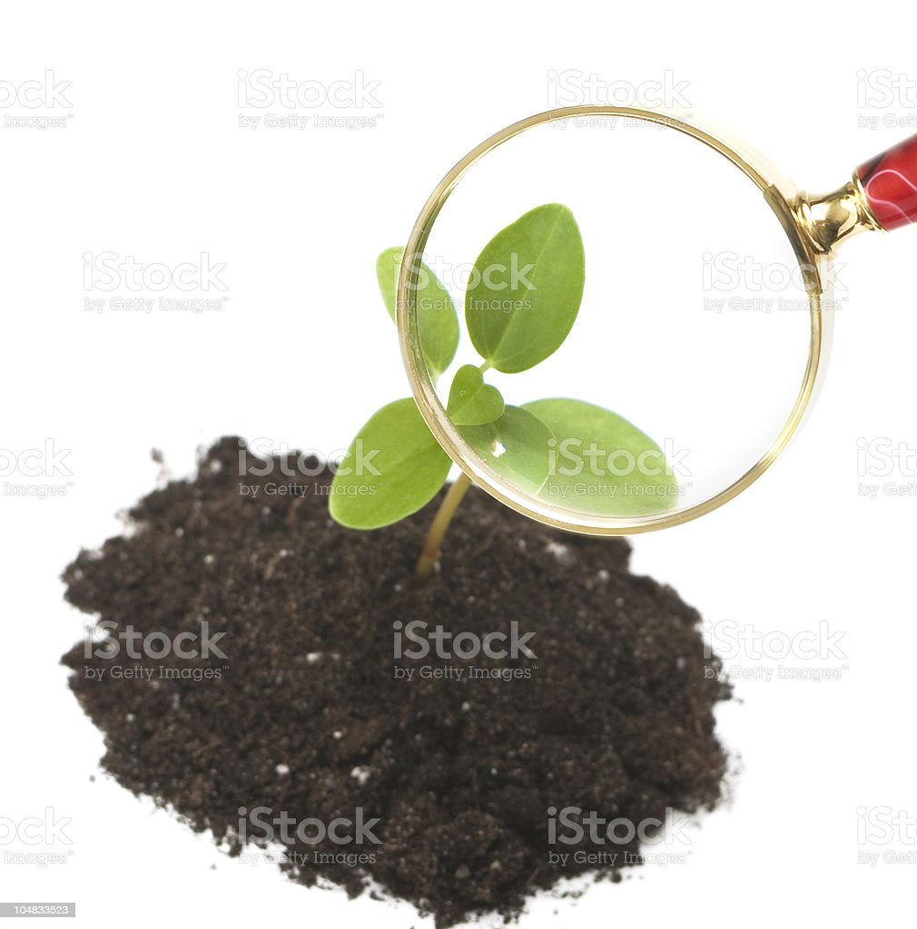 Fresh sprout and magnifying glass royalty-free stock photo