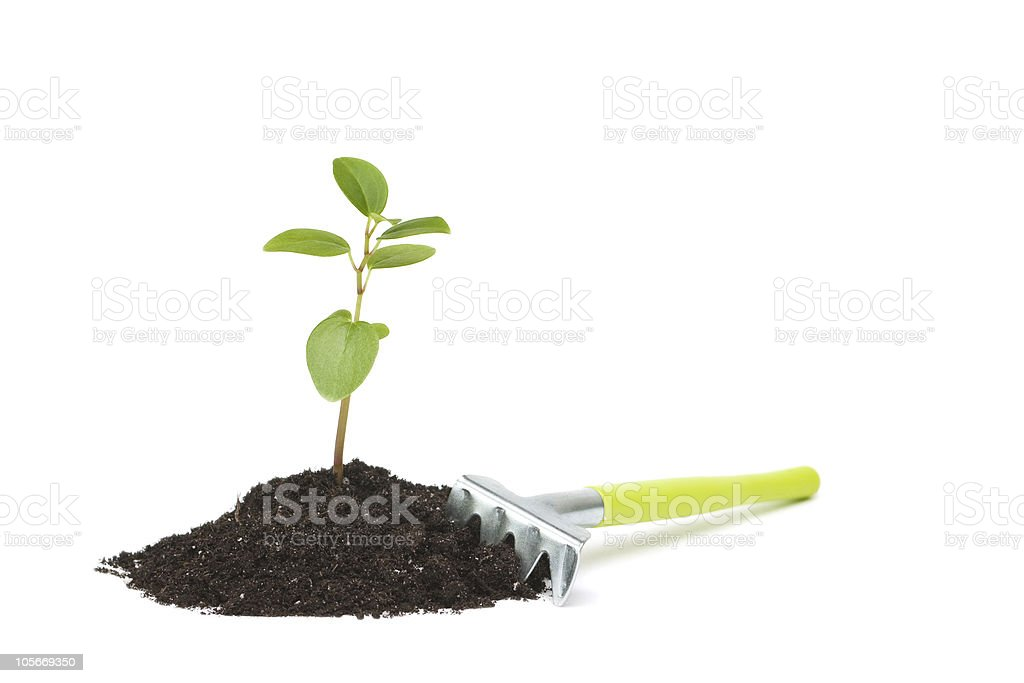 Fresh sprout. royalty-free stock photo