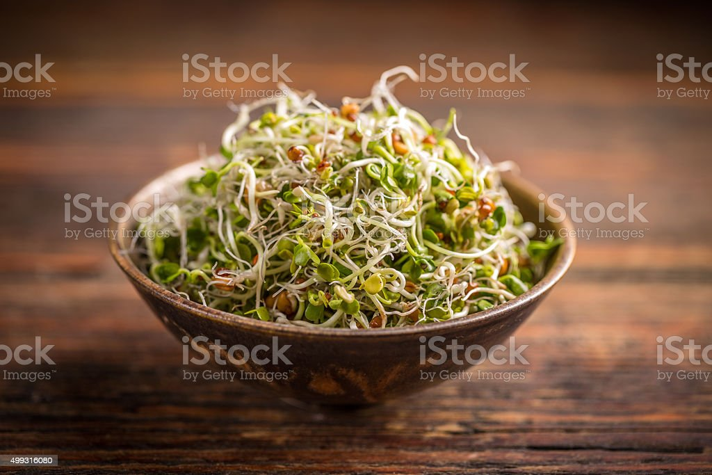 Fresh sprouted seeds stock photo