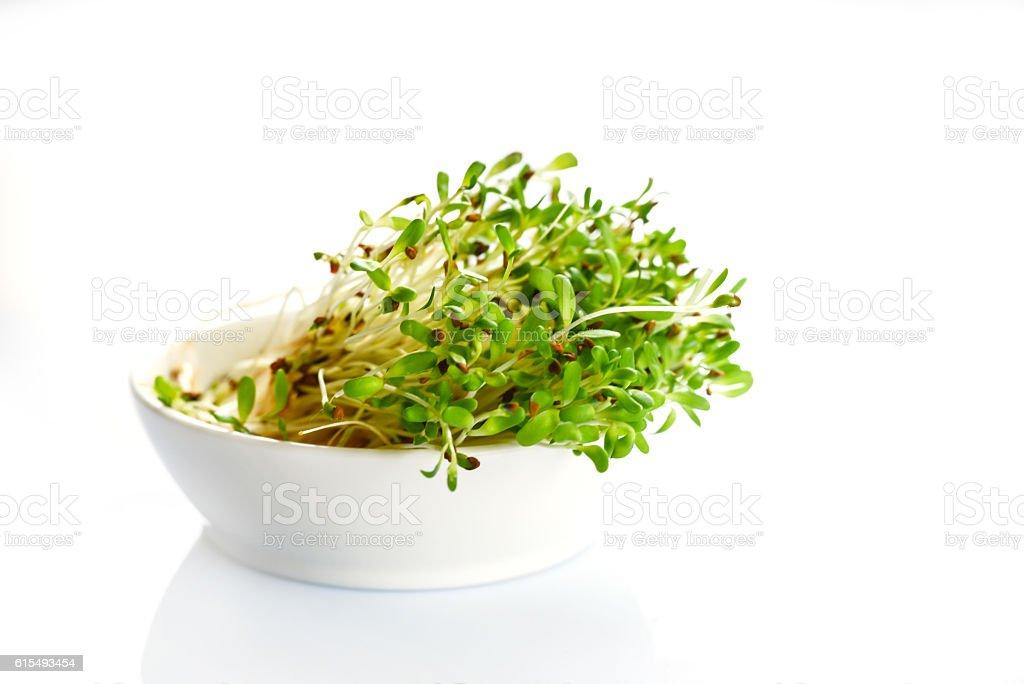 Fresh sprouts of alfalfa on white background stock photo