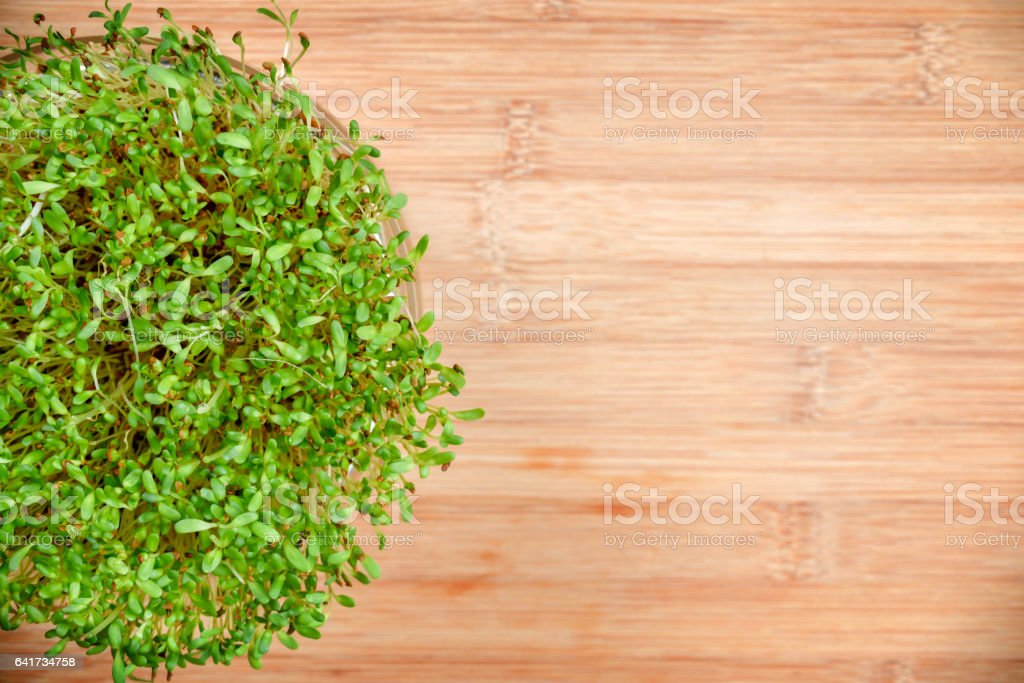 Fresh sprouts of alfalfa on wood background stock photo