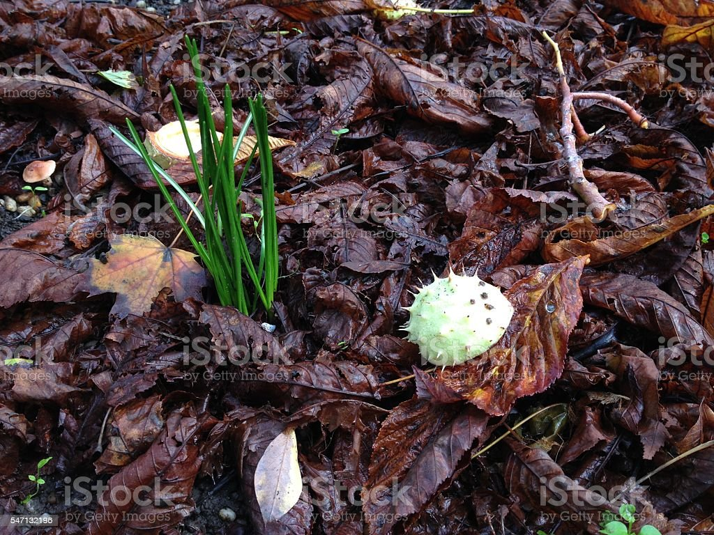 Fresh sprouts within fallen leaves on spring forest ground stock photo