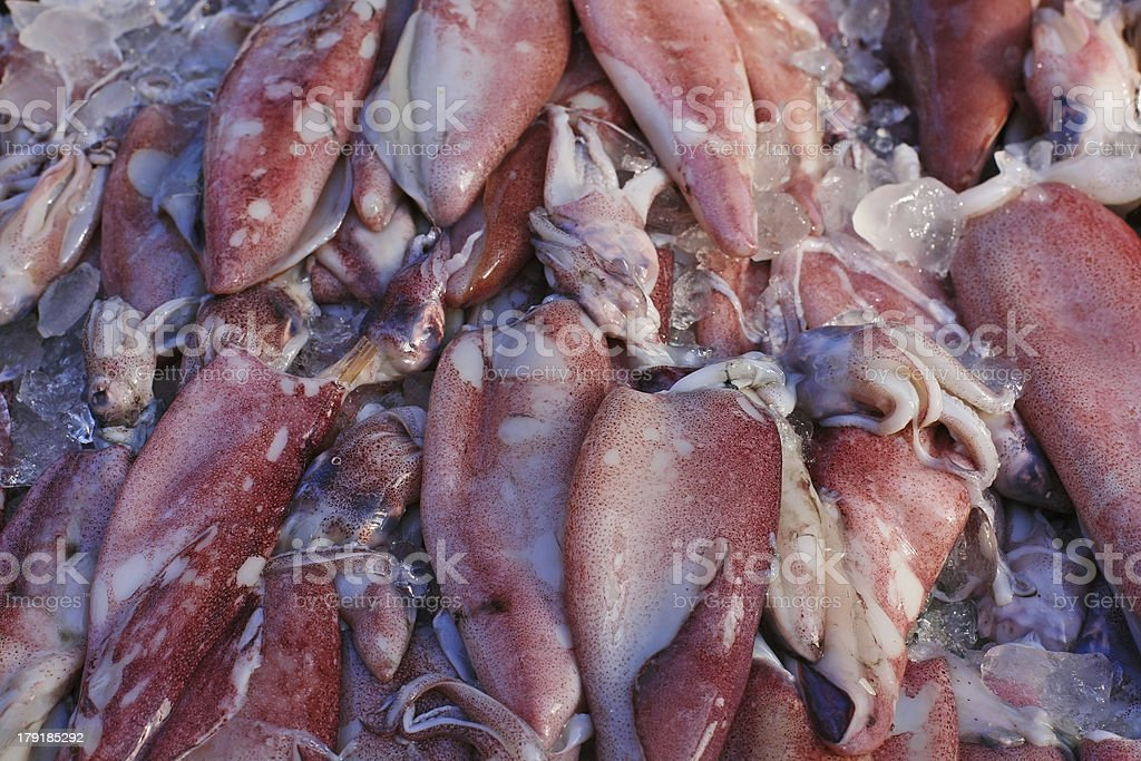 Fresh Squid covering with ice lay royalty-free stock photo