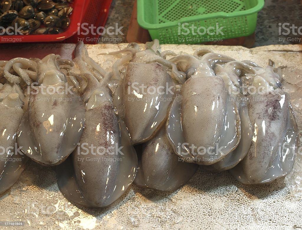 Fresh Squid for Sale royalty-free stock photo