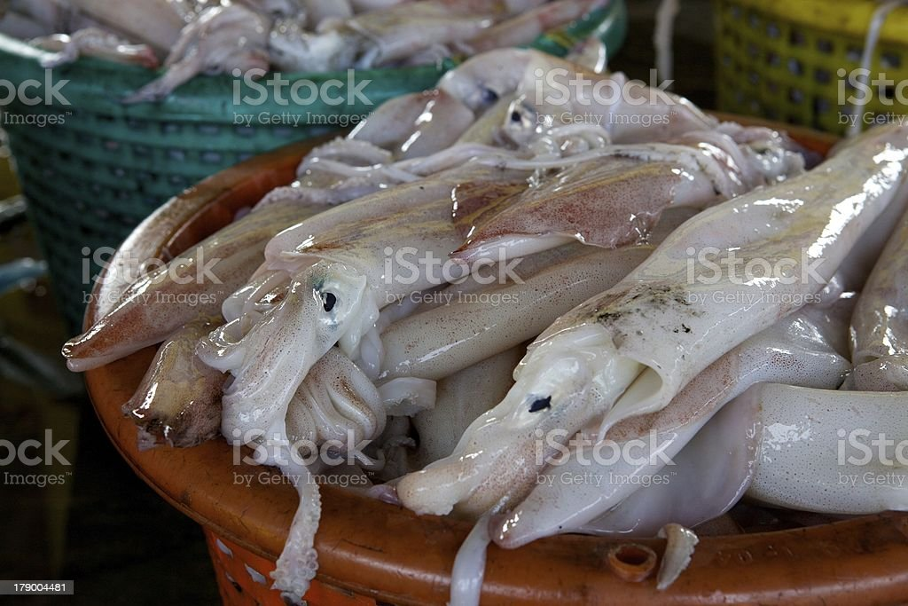 Fresh Squid in market stock photo