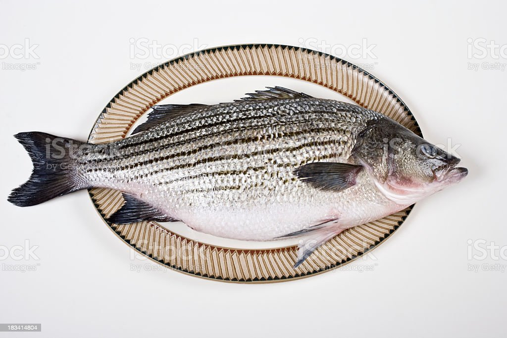 Fresh striped bass arranged on plate stock photo